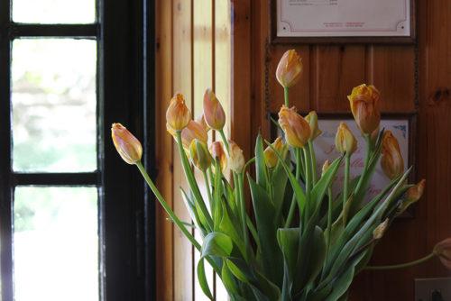 Primavera - Osteria Irma - Campo dei fiori - Varese